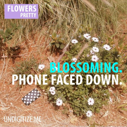 Blossoming. Phone Faced Down.