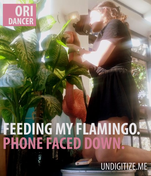 Feeding My Flamingo. Phone Faced Down
